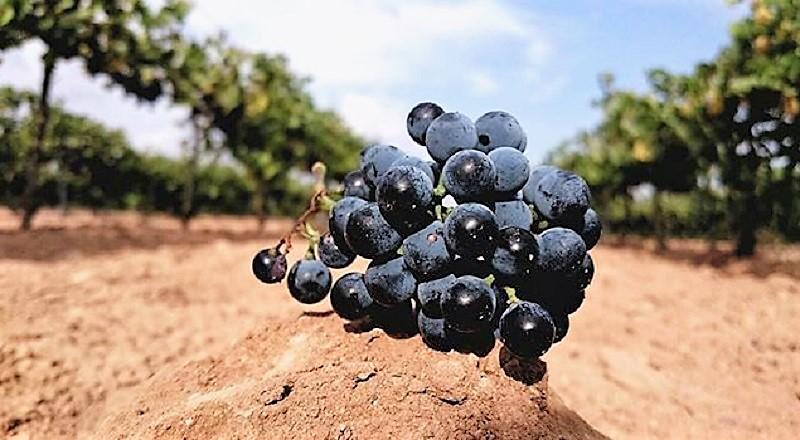 comprar-viñas-mallorca-son-negre-video-home-net (1)