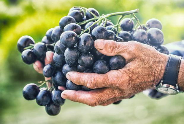 comprar-viñas-mallorca-son-negre-video-home-net (33)
