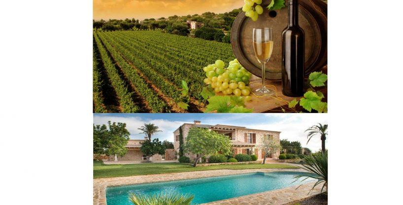 Finca con viñas y proyecto aprobado para casa con bodega y piscina .